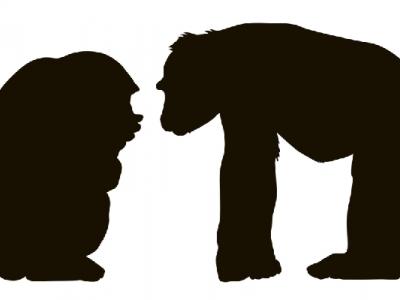 類人猿分類にみるスタッフの特色